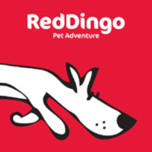 logo_red_dingo_chien